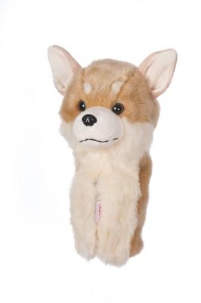 Chihuahua Hybrid